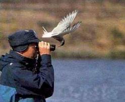 6° CORSO DI BIRDWATCHING PER GLI APPASSIONATI OSSERVATORI DI UCCELLI