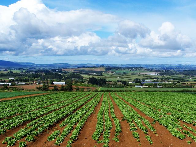 AGRICOLTURA – CROLLO DEI REDDITI