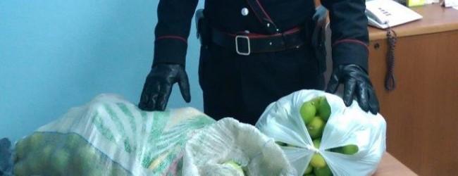 Siracusa| Tentano di rubare agrumi