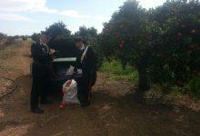Siracusa| In aumento furti nelle campagne
