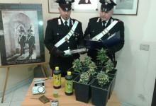 Priolo| Coltivava marijuana in casa