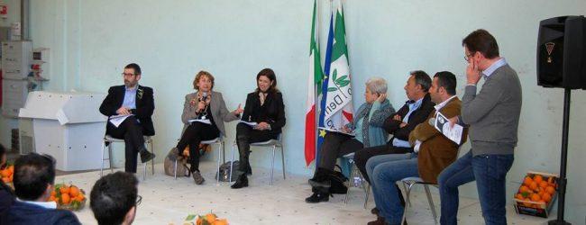 Carlentini| Crisi agrumicola: domani conferenza stampa alla Camera dei Deputati
