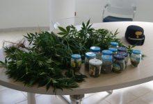 Carlentini| Arrestato commerciante di Scordia: coltivava droga in casa