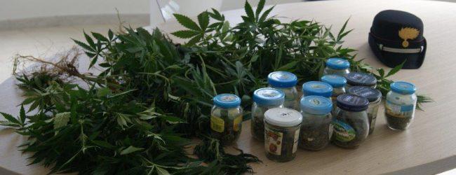 Carlentini  Arrestato commerciante di Scordia: coltivava droga in casa