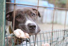 Siracusa| Contributo a chi adotta un cane