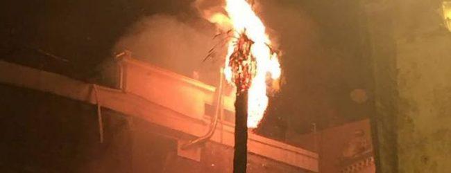 Lentini  Fuochi pirotecnici per sant'Alfio: una palma va a fuoco