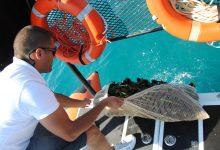 Augusta| La Guardia Costiera sequestra 1.500 ricci di mare