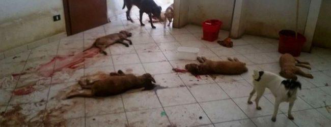 Francofonte| Orribile mattanza di cuccioli. Indagano i carabinieri