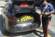 Melilli| Furto di limoni
