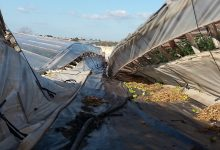 Siracusa  Agricoltura, danni e mancati contributi