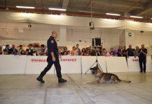 Catania| Inizia il conto alla rovescia per la quarta edizione di Expopet
