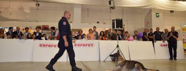 Catania  Inizia il conto alla rovescia per la quarta edizione di Expopet