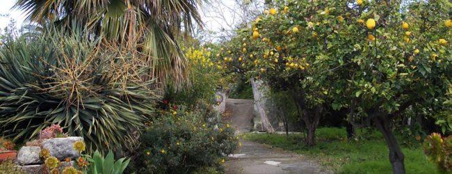 Augusta| Sorpreso mentre ruba limoni