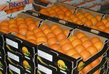 Lentini| Un altro schiaffo alle arance siciliane, passa l'accordo Ue-Sudafrica