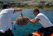 Augusta  La Guardia Costiera sequestra  500 ricci di mare