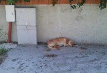 Siracusa| Strage di cagnolini a Fontane Bianche