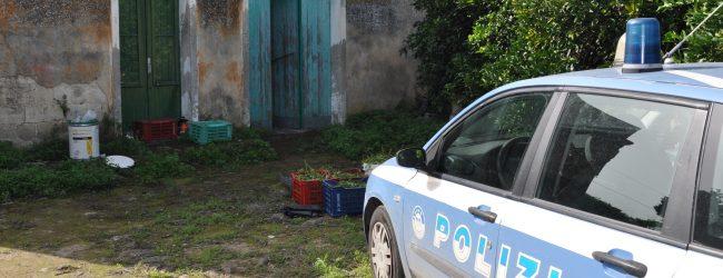 Lentini| Scoperta piantagione di marijuana in contrada Rappis
