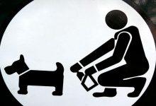 Siracusa| Basta con le deiezioni canine!