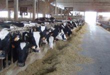 Palermo| Sbloccati 542 mila euro per allevatori