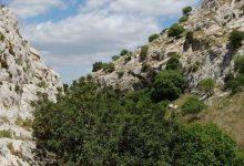 Lentini| Avvisi di garanzia per Bosco e Mangiameli