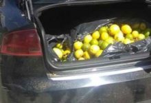 Lentini| Sorpresi a rubare limoni, arrestati due catanesi