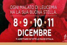 """Augusta  Al via domani l'iniziativa di solidarietà  """"Stelle di Natale"""" organizzata dall'Ail"""