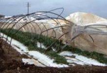Pachino| Danni nevicata, confermati fondi ristoro