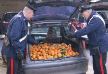 Siracusa| Ruba 500 Kg di agrumi e morde una mano