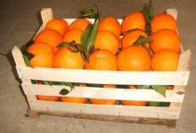 Siracusa| Ladri di agrumi a Cassibile