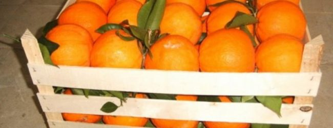 Siracusa  Ladri di agrumi a Cassibile