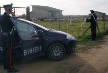 Noto| Abigeato, arrestati in trasferta