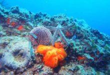 Siracusa| AMP gestirà il SIC marino di Natura 2000