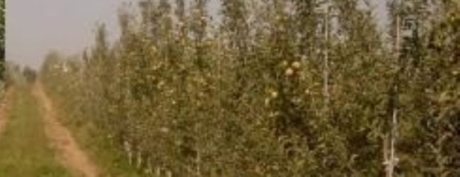 Siracusa  Avviso pubblico per proprietari terrieri