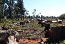 Augusta| Continuano le polemiche dopo il taglio degli eucalipti nel parco dell'Hangar
