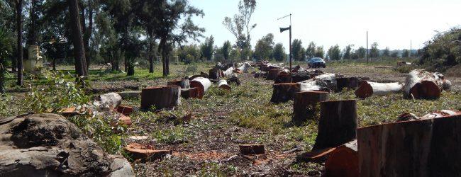 Augusta| Potati quasi a zero gli alberi del parco dell'Hangar