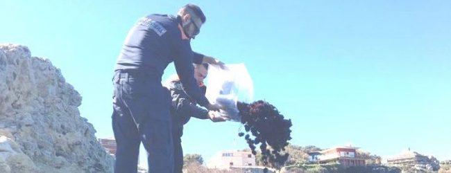 Augusta| La Guardia Costiera sequestra 800 esemplari di ricci di mare