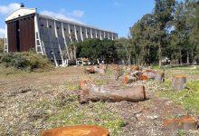 Augusta| Continuano le polemiche sulla potatura degli alberi del parco dell'Hangar