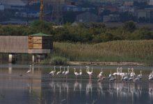 Priolo| Domenica 23 aprile festa delle oasi e riserve Lipu per godersi la natura attraverso i cinque sensi