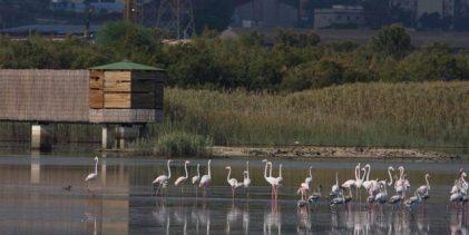 Priolo  Domenica 23 aprile festa delle oasi e riserve Lipu per godersi la natura attraverso i cinque sensi