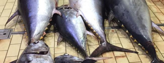 Siracusa  Maxisequestro di tonno rosso, 8.000 euro di sanzione al trasgressore