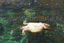 "Augusta| Ultim'ora – Carcassa di tartaruga allo ""Sbarcatore"""