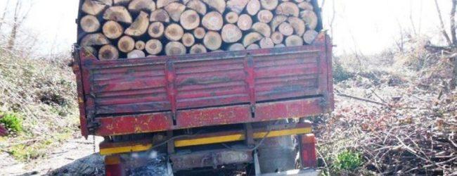 Carlentini | Tagliavano e rubavano legna in un fondo di contrada Brunetta, in manette due catanesi