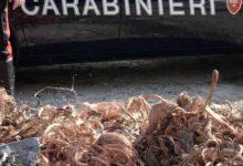 Priolo Gargallo| Sorpreso a rubare materiale ferroso e rame. Arrestato dai carabinieri