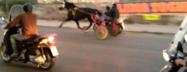 Siracusa| Corse clandestine dei cavalli: la polizia esegue numerosi controlli in alcune scuderie