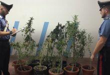 Floridia| Nascondeva una coltivazione di marijuana sul  soppalco della sua officina