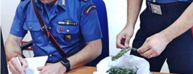 Carlentini   Busta con 50 grammi di marijuana dentro un pozzo, arrestato un bracciante agricolo