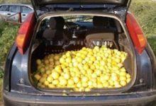 Lentini | Rubavano limoni, denunciati due catanesi