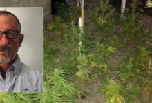 Augusta  Coltivava una piantagione di cannabis nella frazione di Brucoli