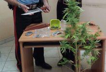Priolo Gargallo| Ventenne coltiva droga in casa. Arrestato dai carabinieri