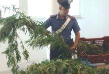 Carlentini | Piante di canapa indiana e marijuana in casa, 49enne in manette
